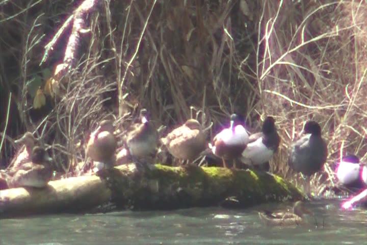 季節風を避ける渡り鳥たち