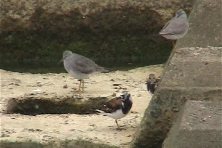 大瀬川の鳥たち