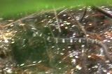 グラスヒバァのスイミング