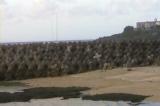 東区海岸のアジサシ