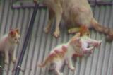 ネコの家族