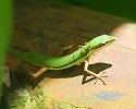 徳之島の動植物展NO5