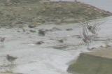 丹向川河口の水鳥たち