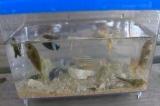 徳之島の熱帯魚