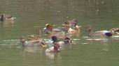上名道池の水鳥たち