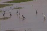 海鳥たちの狩り