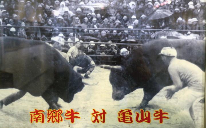 南郷牛対亀山牛