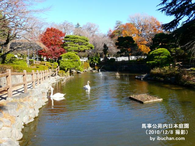馬事公苑内日本庭園2