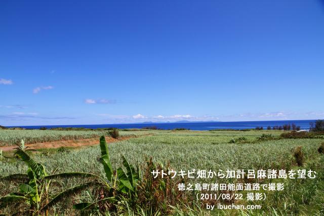 サトウキビ畑から加計呂麻諸島を望む