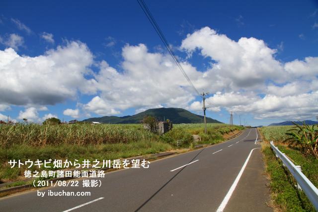 サトウキビ畑から井之川岳を望む