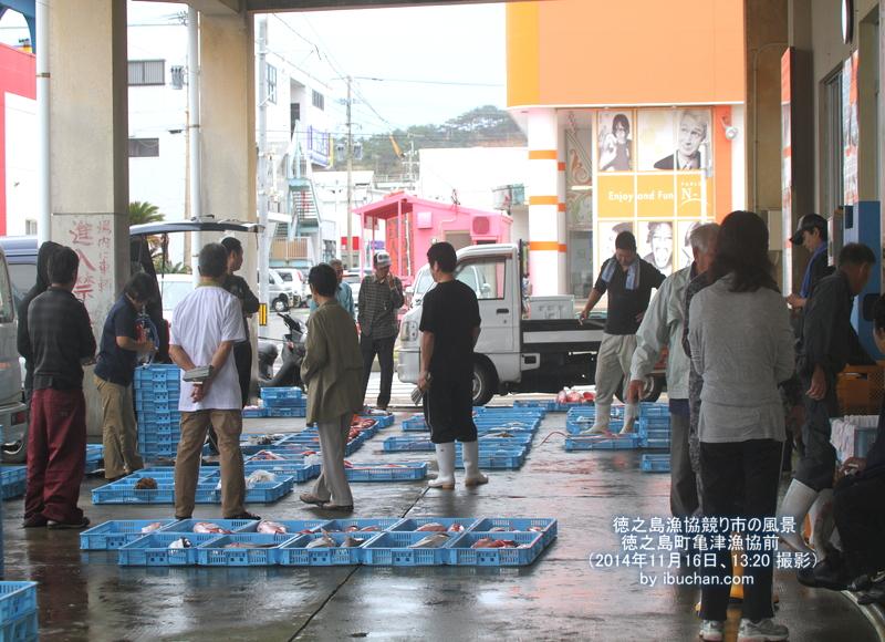 徳之島漁協競り市の風景