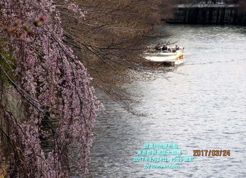 目黒川の屋形船