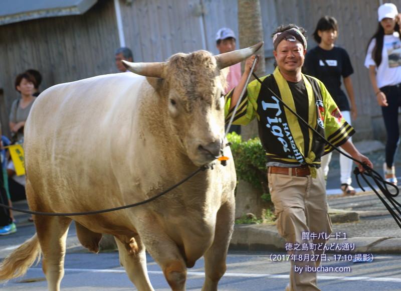 どんどん祭り(闘牛パレード)1
