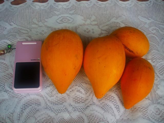カニステルの果実