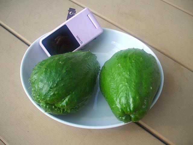 センナリウリ(千成瓜)
