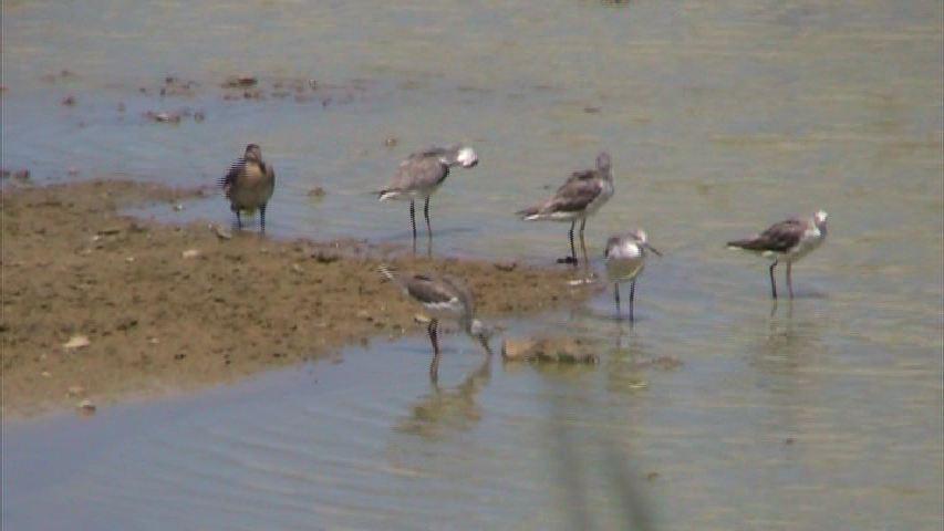 諸田池の旅鳥たち