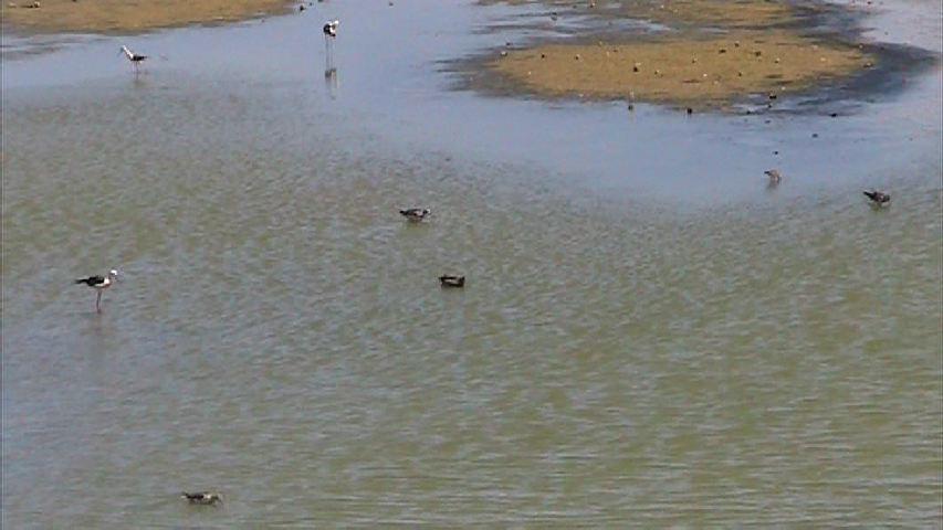 諸田池の水鳥たち