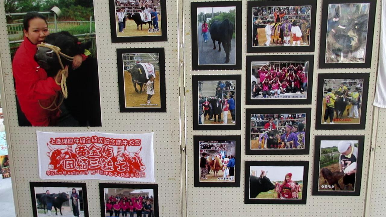 沖縄の闘牛女子 久高幸枝闘牛写真展