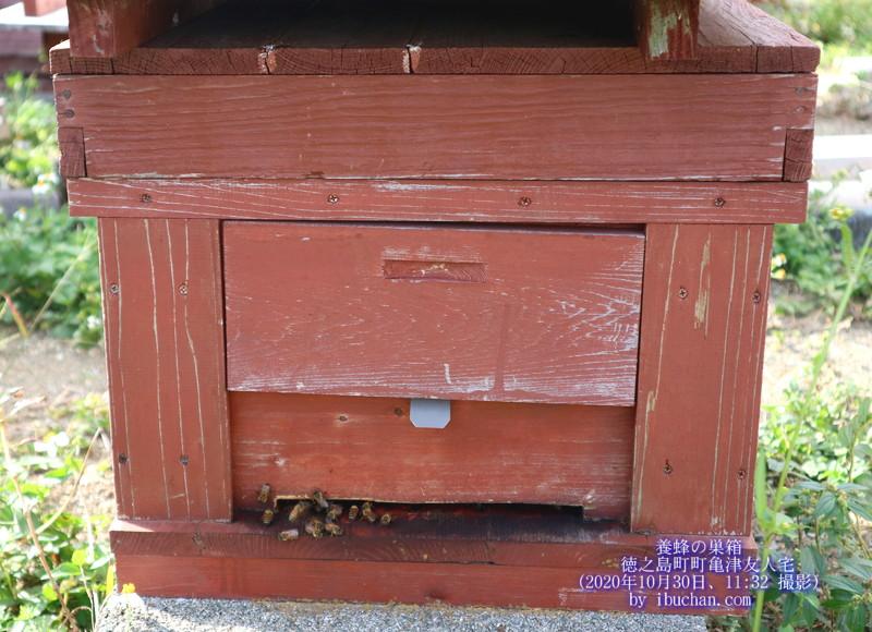 養蜂の巣箱