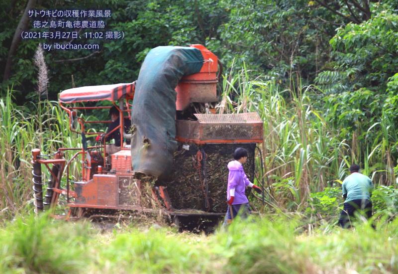 サトウキビの収穫作業風景