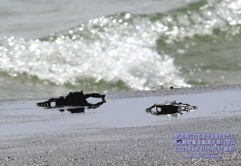 防波堤に打ち寄せる波とガザミ