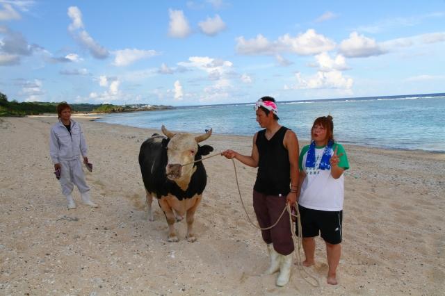 喜念浜へ散歩トレーニングに来ていた「笑軍号」