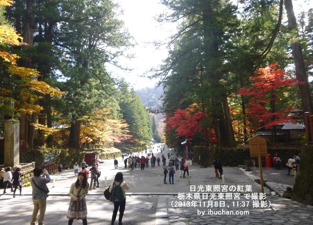 日光東照宮の紅葉