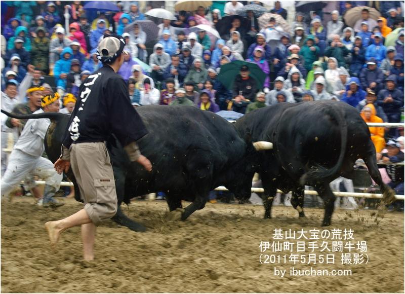 徳之島闘牛「基山大宝の荒技」